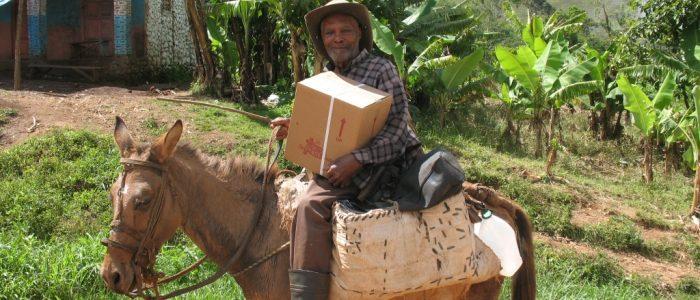 #14 Haitian on dunkey